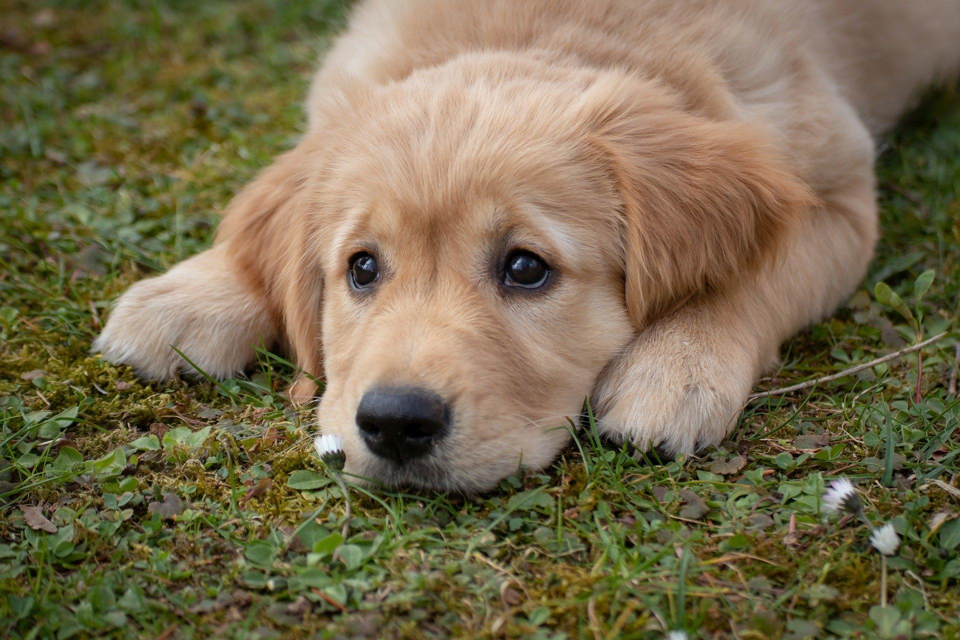 proprietar câine nou